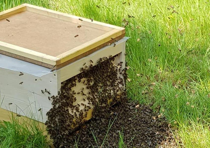 Unsere Bienen fliegen